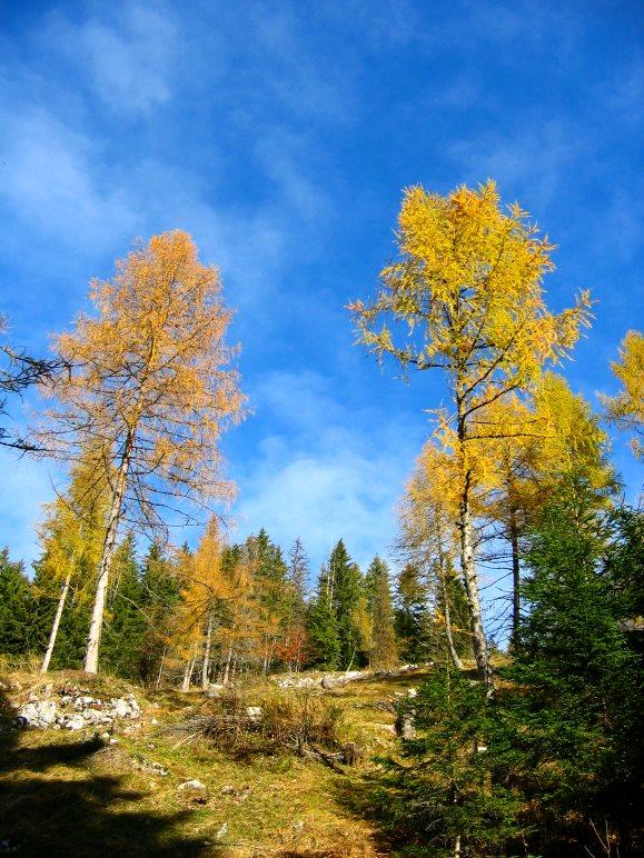 Herbstliche Bäume unterhalb der Kala-Alm auf der Straße zum Gasthaus Schneeberg