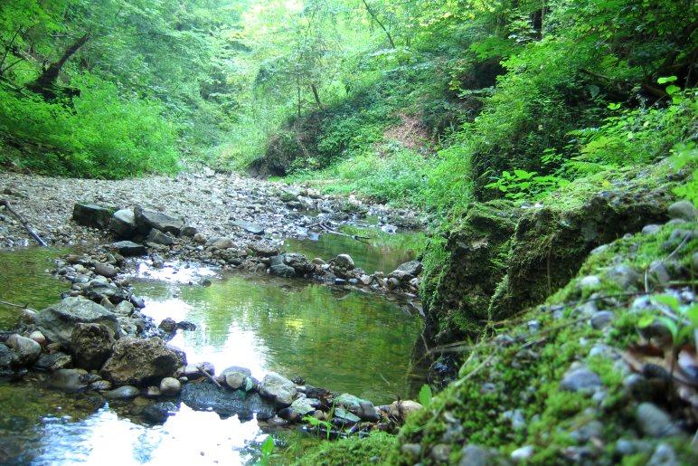 Der Bach schlängelt sich durchs wilde Kiental