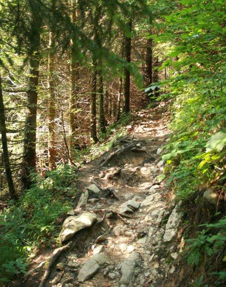 Waldweg auf dem Bad Wiesseer Höhenweg