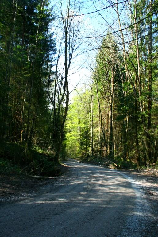 Auf dem Weg durch den Wald zum Keilkopf
