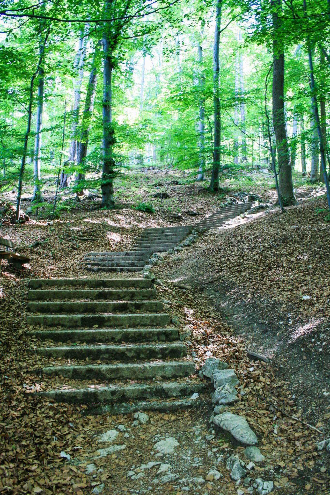 Auf Treppen durch den Wald