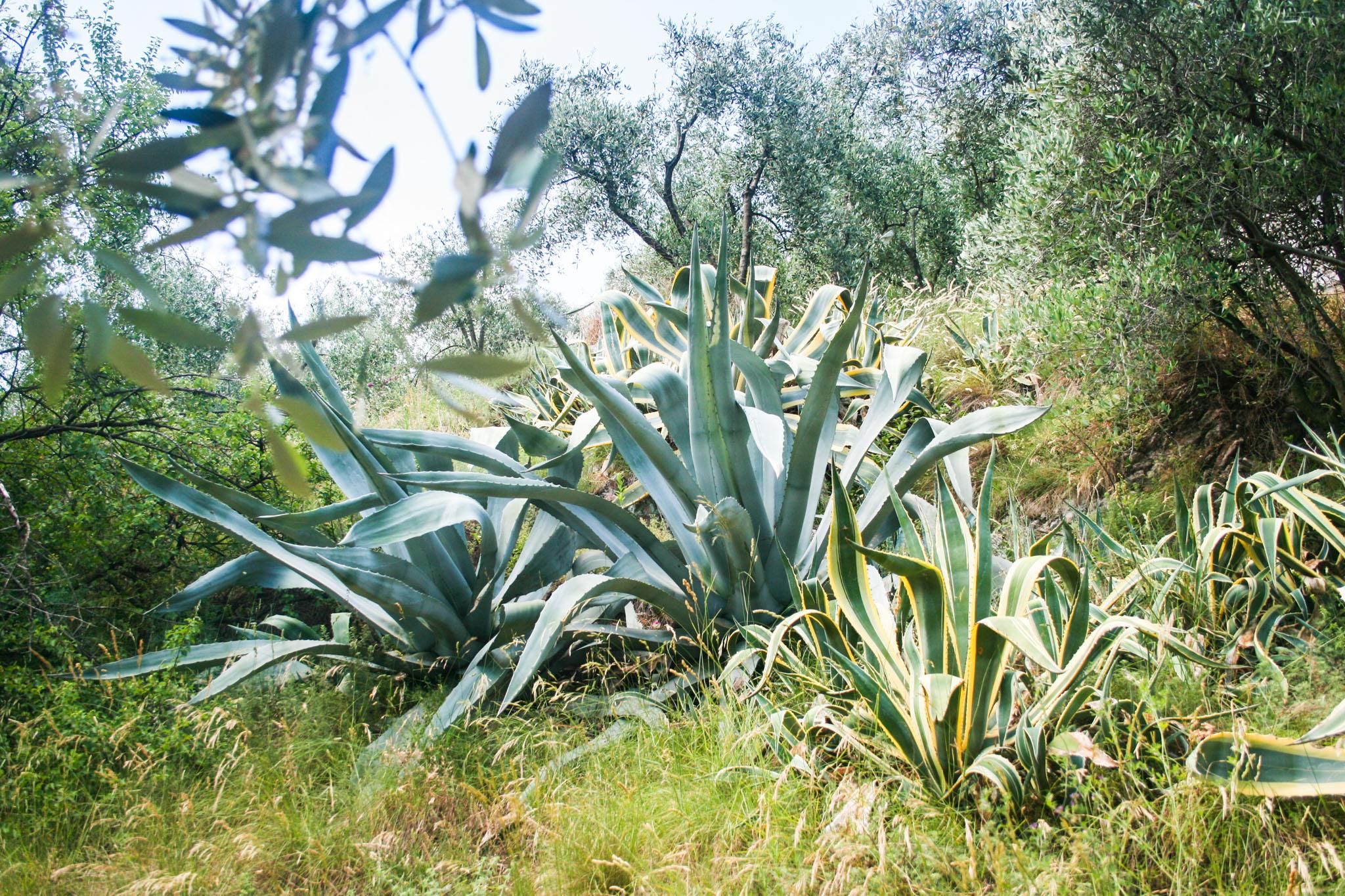 Riesenpflanzen und Aussichtsbank auf dem Weg hinauf