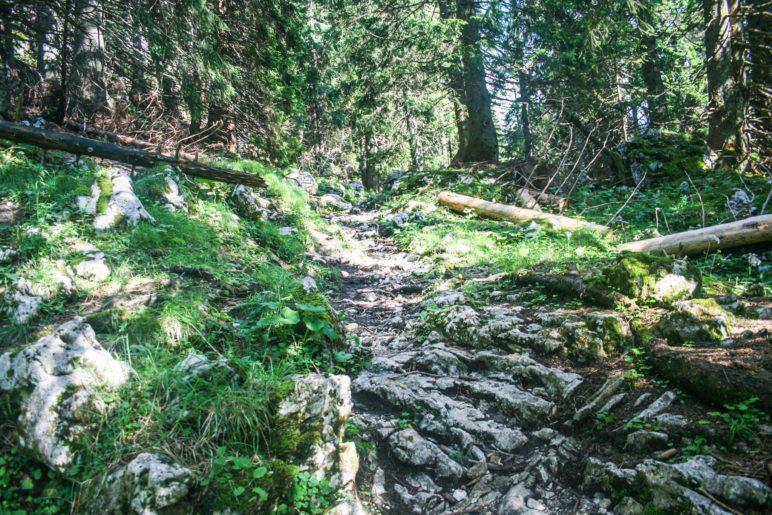 Steinige Pfade durch den Wald