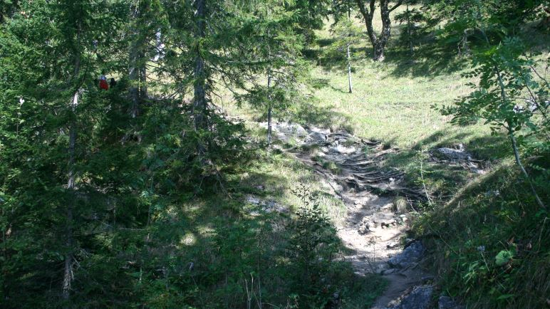 Wurzeliger Weg, etwa in Höhe der unteren Sonnbergalm