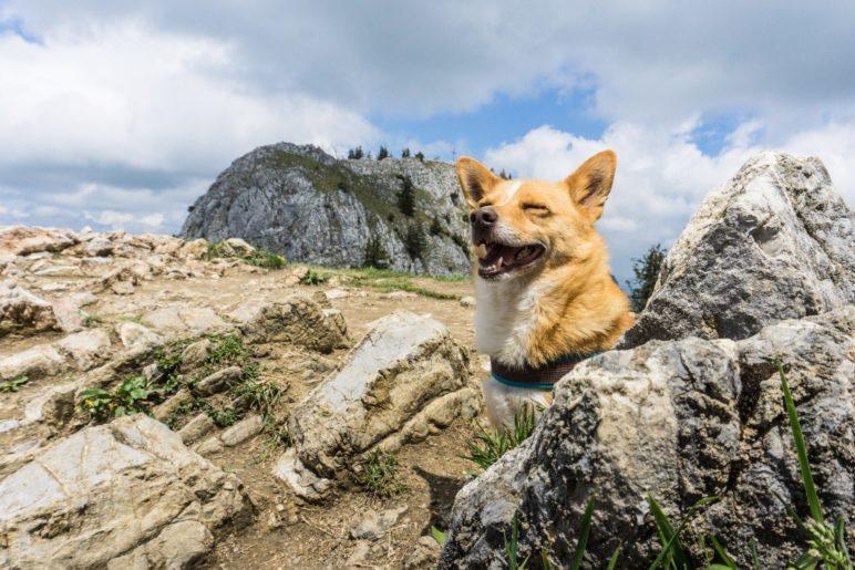 Berghund Mikki auf dem Heuberg
