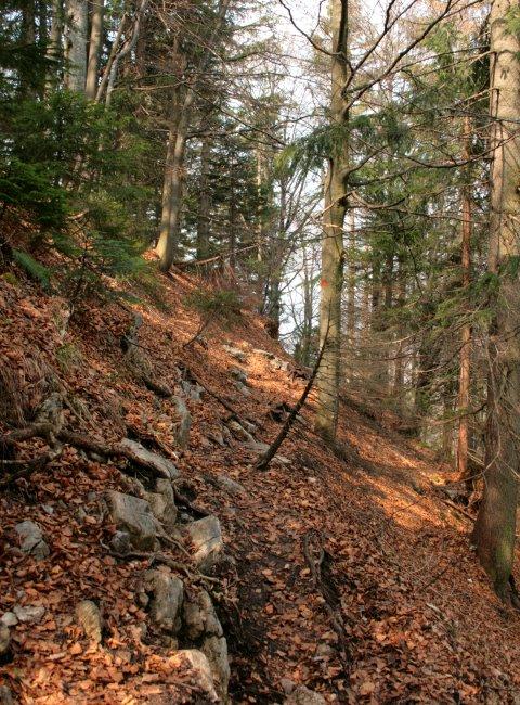 Schmaler Hangweg zur Baumgartenschneid