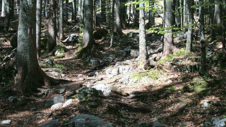 Wilder Abstiegsweg nach Sachenbach