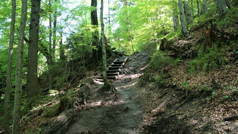 Auf dem Weg zum Jochberg-Gipfel