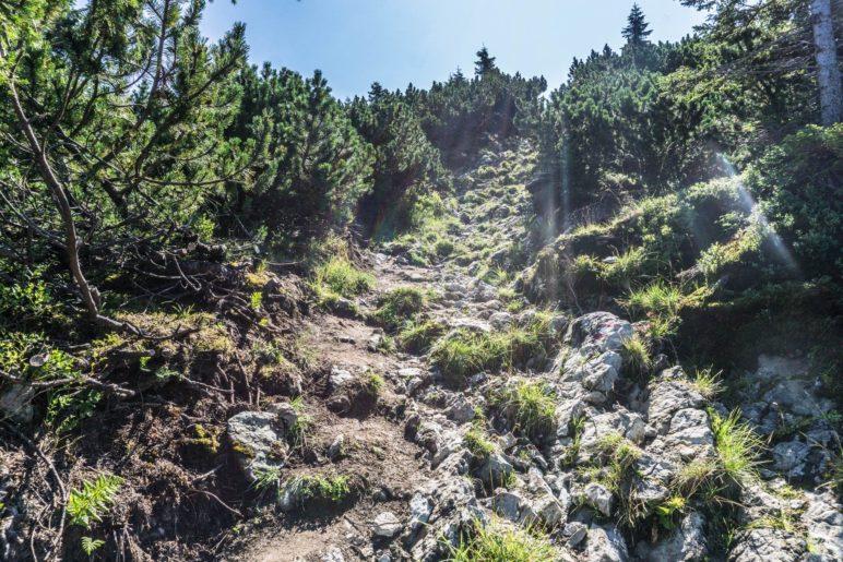 Steil bergab über Felsen zwischen den Latschen hindurch
