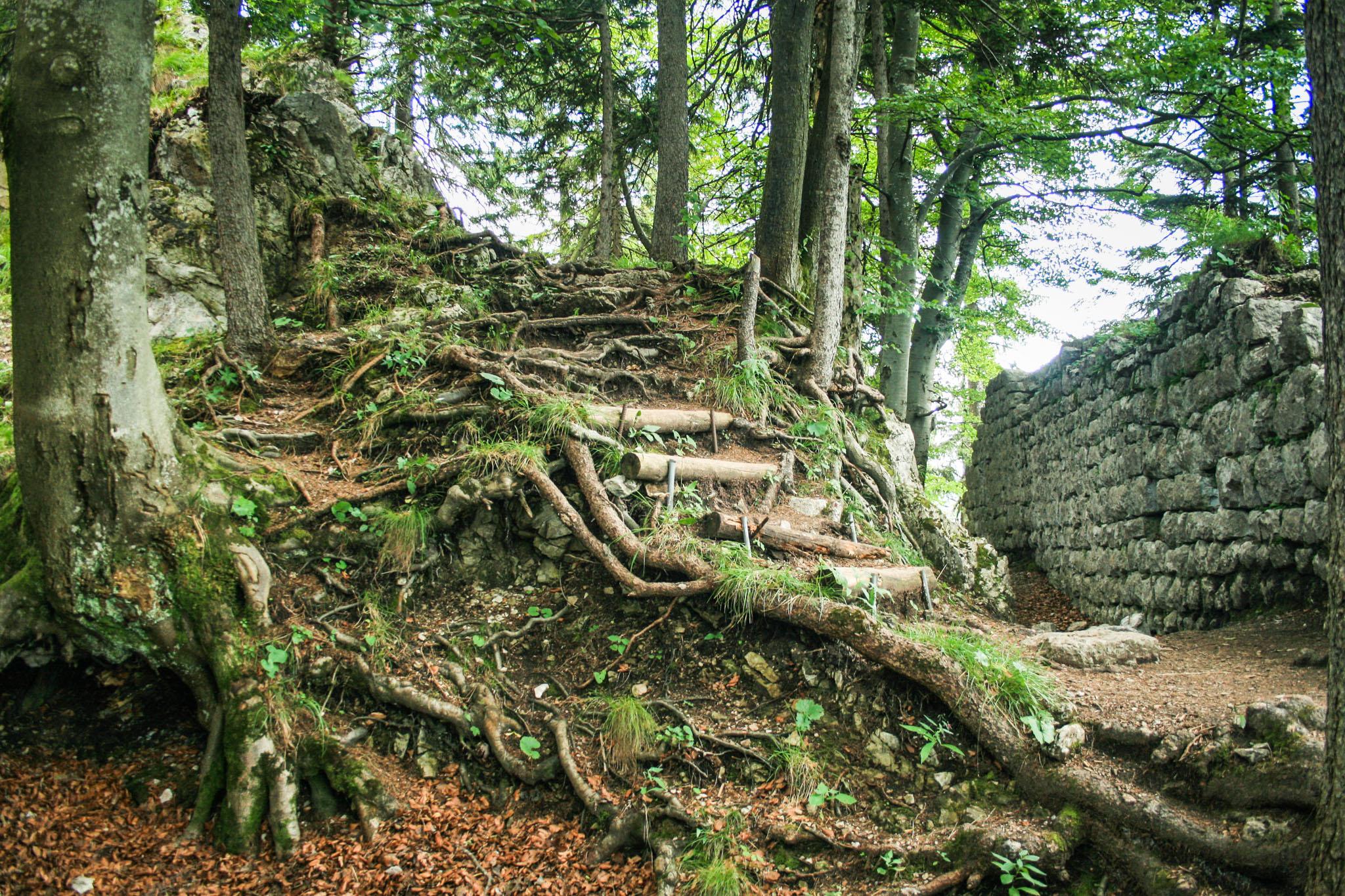 Die Burgruine Hohenwaldeck über dem Schliersee