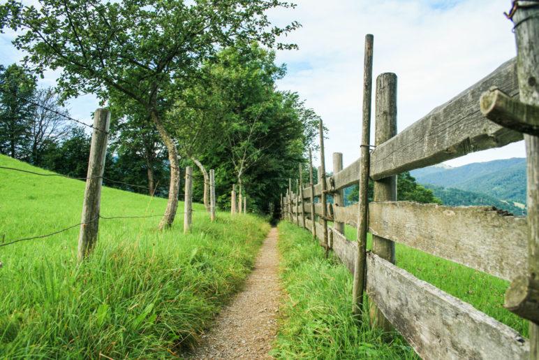 Der Wanderweg am Hof Oberleiten