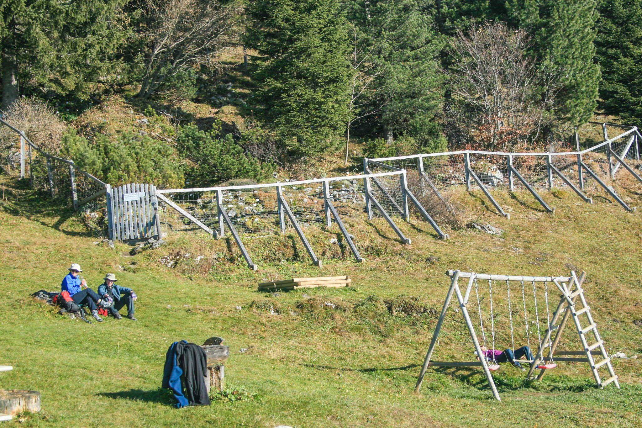 Der Alpenpflanzengarten an der Vorderkaiserfeldenhütte