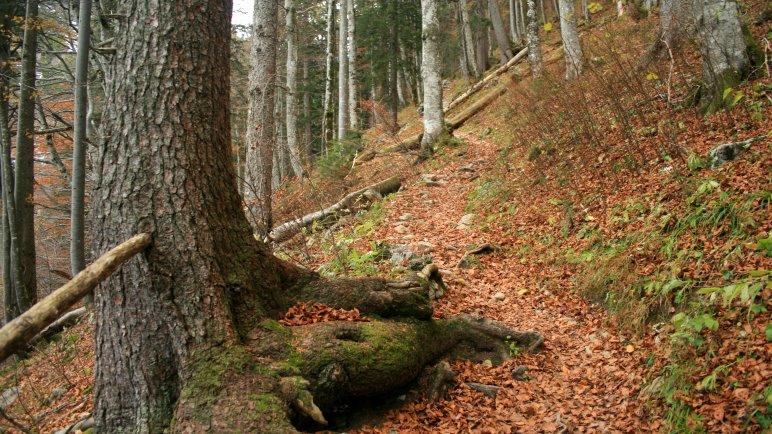 Über den Bergsteig durch den Wald zur Materialseilbahn