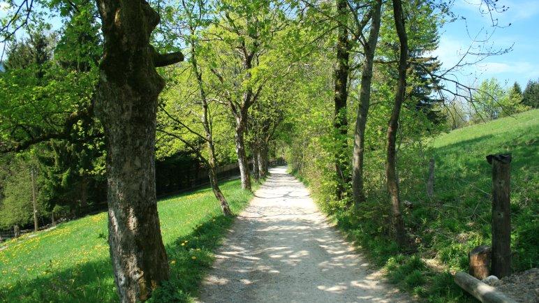 Auf dem Weg zur Schliersbergalm