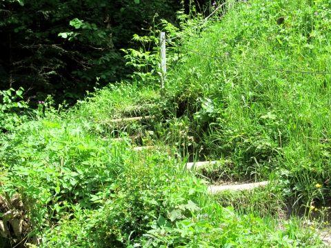 Treppe durch die Wiese vor der Kochelbergalm