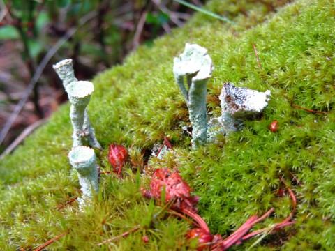 Merkwürdige Pilze am Wegrand