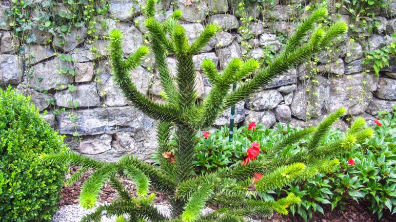 Ungewöhnliche Pflanzen im Botanischen Garten
