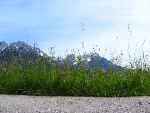 Gras - Weg - Berg