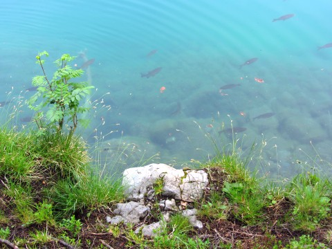 Am Ufer des Hintersteiner Sees