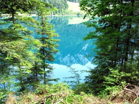 Zwischen den Bäumen zeigt sich der Hintersteiner See - der ist wirklich so grün, wie er hier aussieht