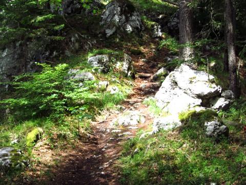 Waldpfad um den Achleitenkogel herum