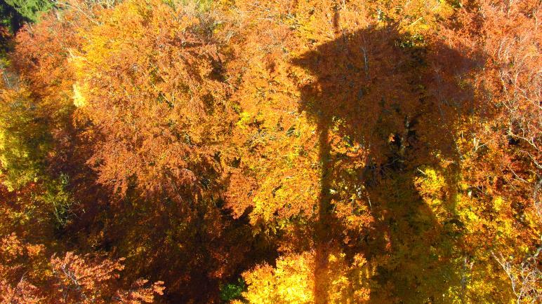 Der Ebersberger Aussichtsturm als Schatten auf den Herbstbäumen