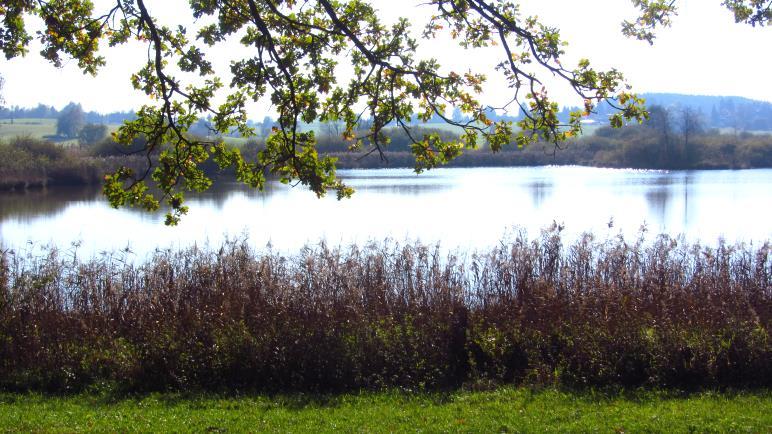 Der Egglburger See, vom Uferweg aus gesehen