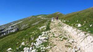 Ein breiter Wanderweg über Graswiesen auf dem Weg zum Rifugo Chierego