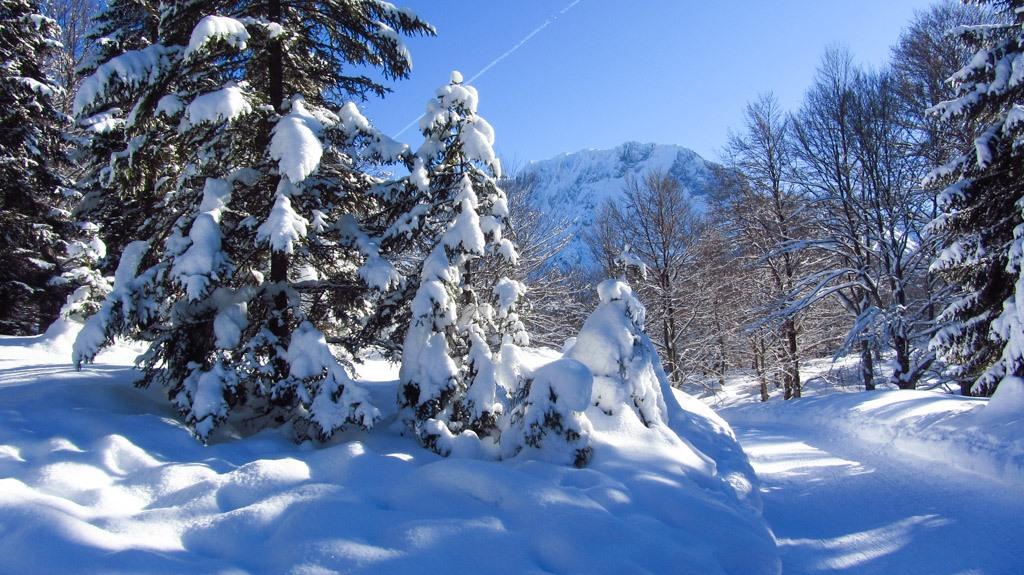Die Rodelbahn am Kranzberg mit Schnee satt an einem strahlenden Wintertag