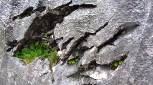 Wieder einmal bizarr verwitterte Felsen