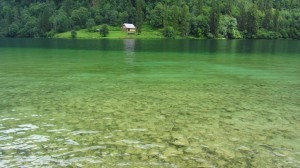 Grünes Wasser am Königssee