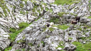 Diese Schafe sind die letzten Tiere, die wir heute sehen werden
