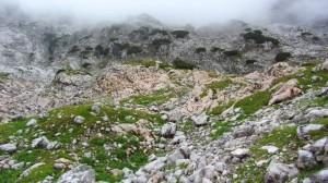 Es gibt sogar ein wenig Grün im Steinernen Meer