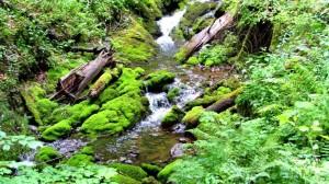 Ein Bach wie im Urwald, welch ein Kontrast zu dem, was uns im Steinernen Meer erwartet