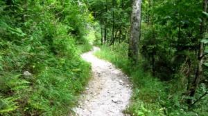 Wandern durch den Wald, welch Abwechslung nach dem Steinernen Meer