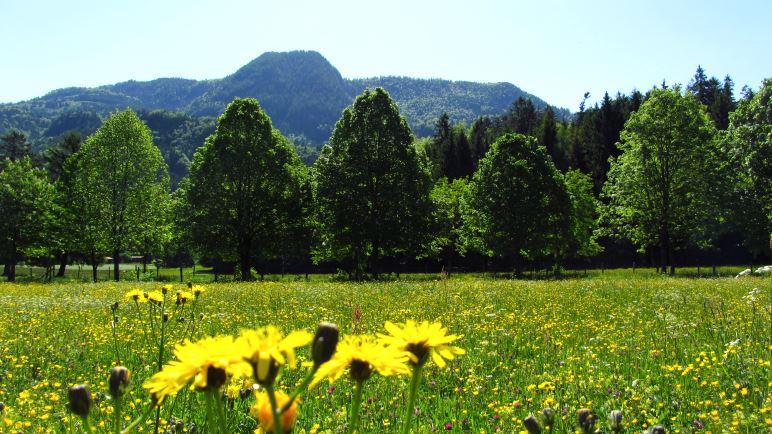 Eine große Blumenwiese am Beginn der Wanderung