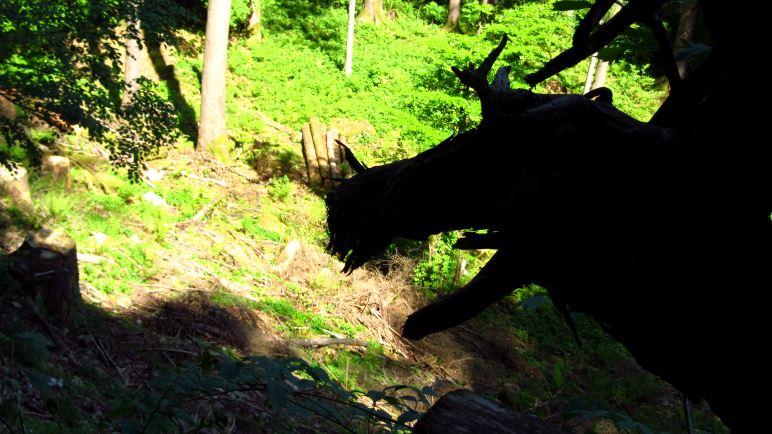 Vorsicht: Im Wald wohnen auch Drachen! Einen haben wir gesehen.
