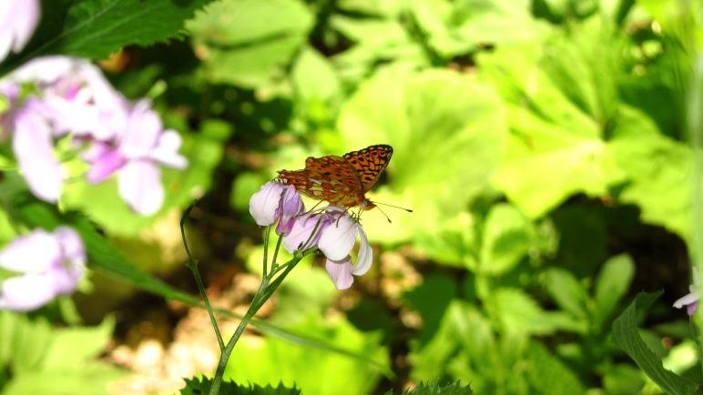 Mitten im Wald lassen sich Schmetterlinge beobachten