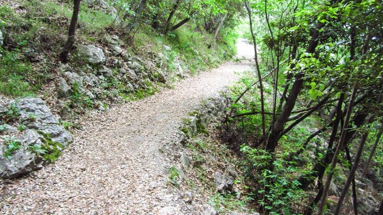 Der Wanderweg durch den Bergwald ist flach und leicht zu gehen