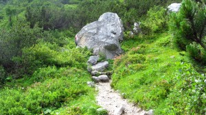 Wie durch einen Alpengarten führt der Wastl-Lackner-Steig hier