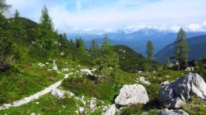 Idealer Brotzeitplatz, mitten in den Bergblumen