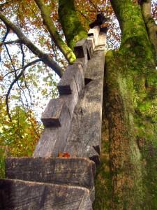 Wie eine Leiter am Obstbaum lehnt die zackige Holzlatte am Stamm