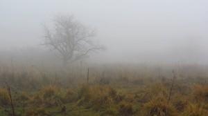 Nebelwelt an der Wasserkuppe