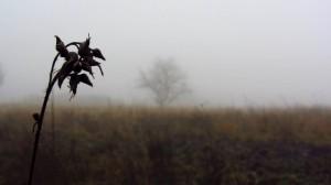 Pflanzen im Nebel auf der Wasserkuppe