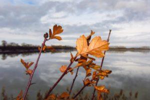 Herbstblätter am See