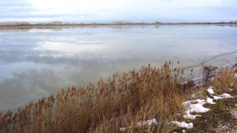Nordsee-Feeling mit Seegras am Ufer des Ismaninger Speichersees