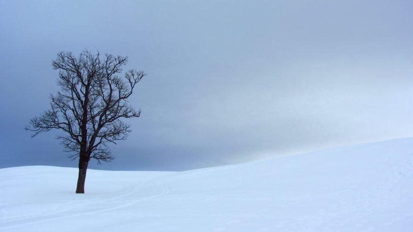 Bäume, Schnee und Stille auf der Hemmersuppenalm