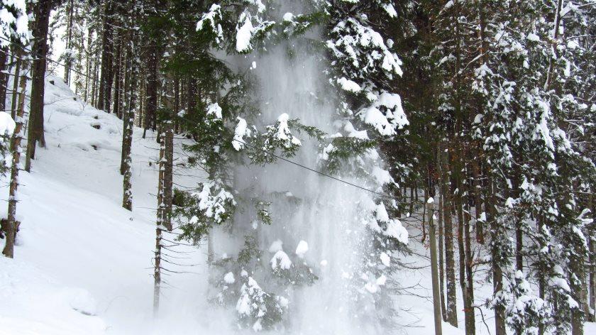 Schneedusche im Wald