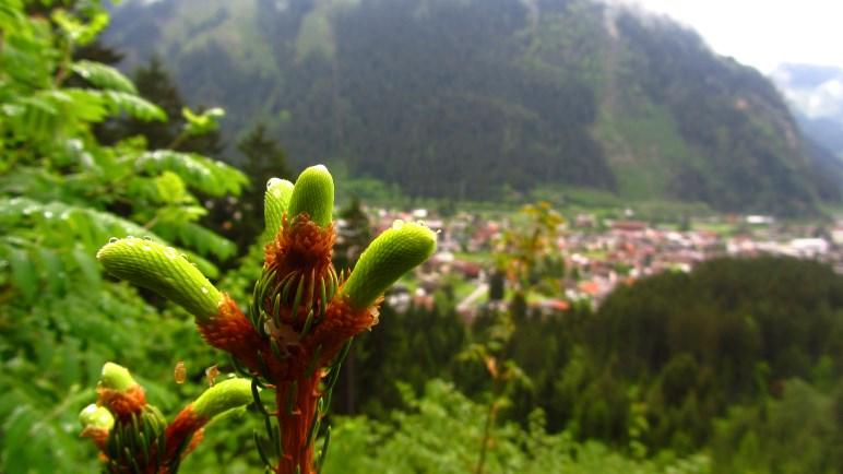 Wolkenverhangener Ausblick auf Mayrhofen