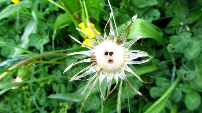 Oh, eine Blume mit Gesicht!